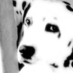 Confusion en perros