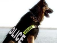 Perro policia con chaleco antibalas