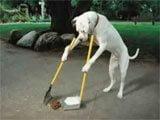 Videos e imagenes de perros en situaciones divertidas