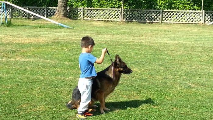 niño intentando adiestrar a un pastor alemán