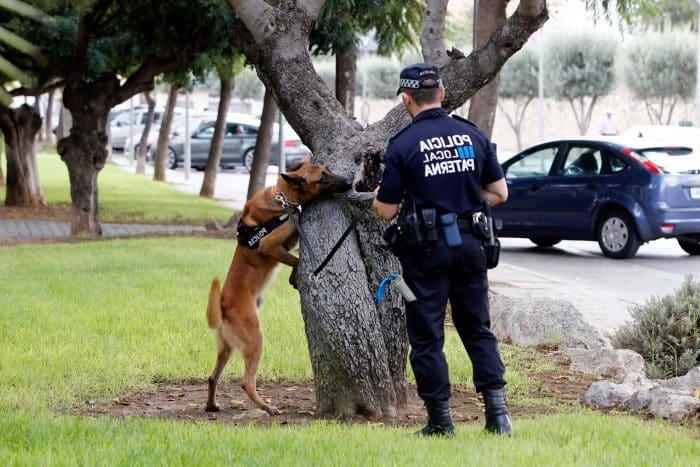 policía pastor alemán rastreando algo