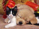 Perrito Descansando Junto a su Mejor Amigo.