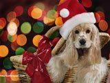 Un Tierno Cachorrito, El Esperado Regalo de Navidad.