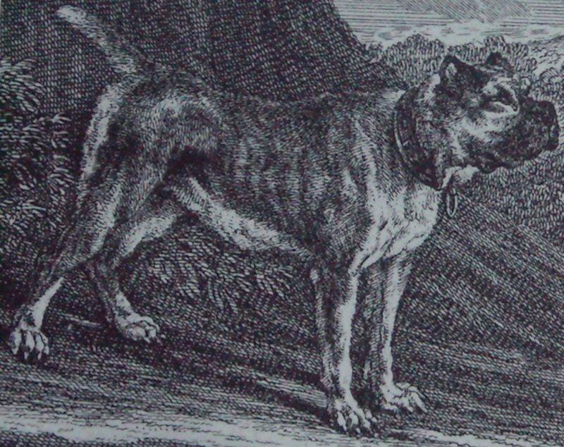 ancestros del bóxer