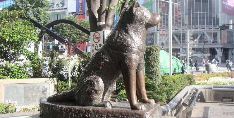 Estatua de Hachiko el famoso akita inu