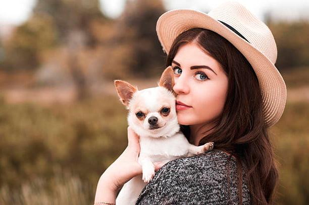 perro chihuahua junto a bella chica
