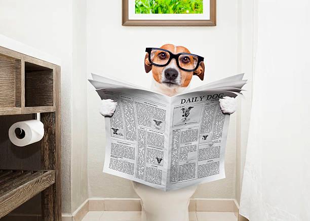 perro con diarrea sentado en el wc leyendo un periódico
