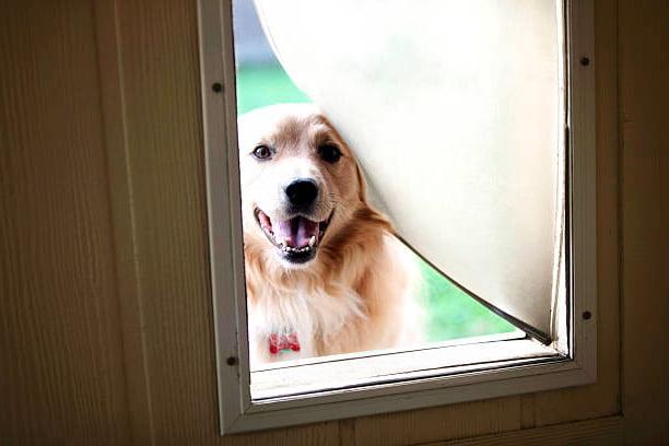 puerta para perros barata para que un perro adulto salga a orinar