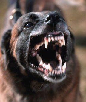 Enfermedades de perros parte 1