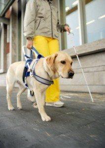 Comportamiento ciudadano frente un perro lazarillo o guía