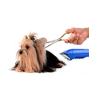 Articulos de peluqueria para Perros