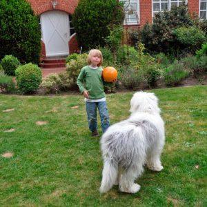 bobtail razas de perros pequeños y medianos para niños