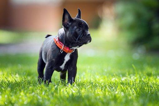 Razas De Perros Pequeños Bonitos Aperradoscom