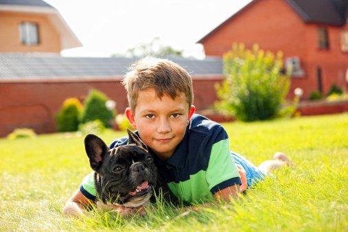 bulldog frances razas de perros pequeños para niños