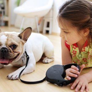 carlino o pug razas de perros pequeños para niños