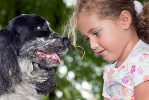 cocker spaniel razas de perros pequeños para niños
