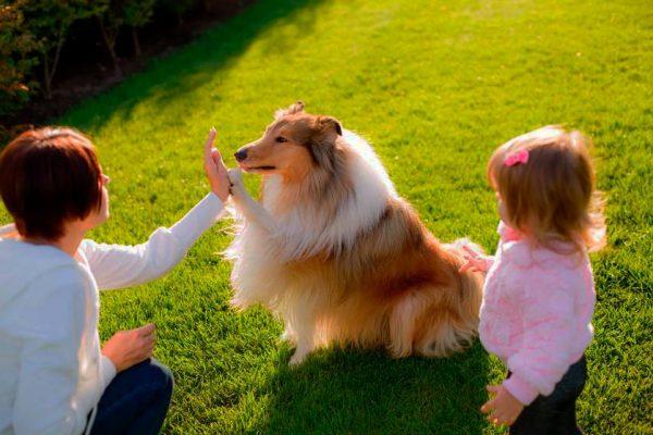 Razas De Perros Pequenos Y Medianos Para Ninos Aperrados Com