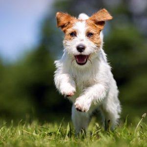 Razas de perros peque os - Casas para perros pequenos ...