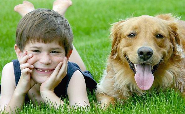 razas de perros pequeos y medianos para nios