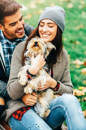 yorkshire terrier razas de perros pequeños y cariñosos