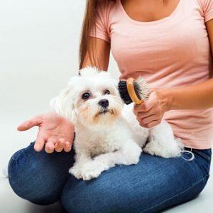 atractiva mujer joven cepillando el pelo de un perro