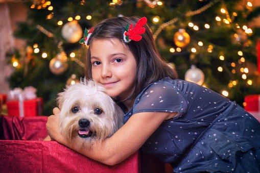 bichon maltes el mejor regalo para niña