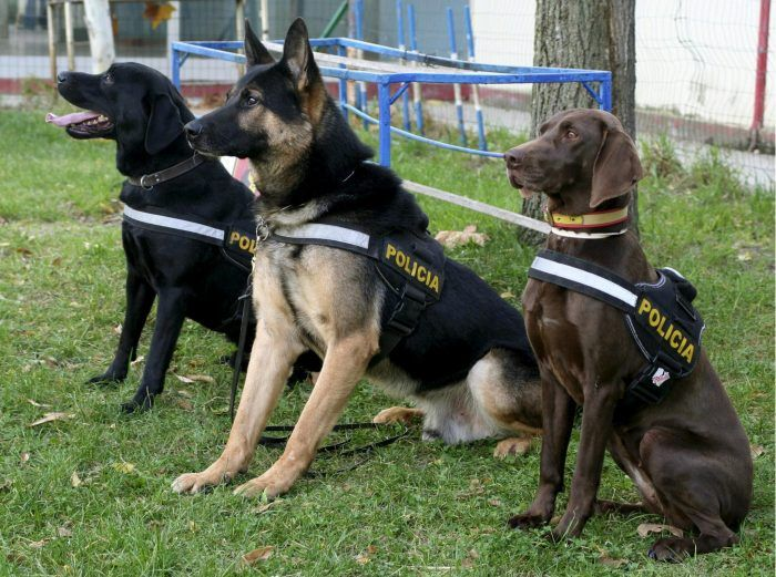 entrenamiento de perros policías