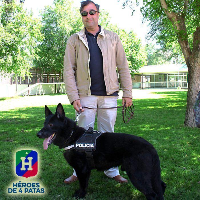heroes de 4 patas perros policías en adopción
