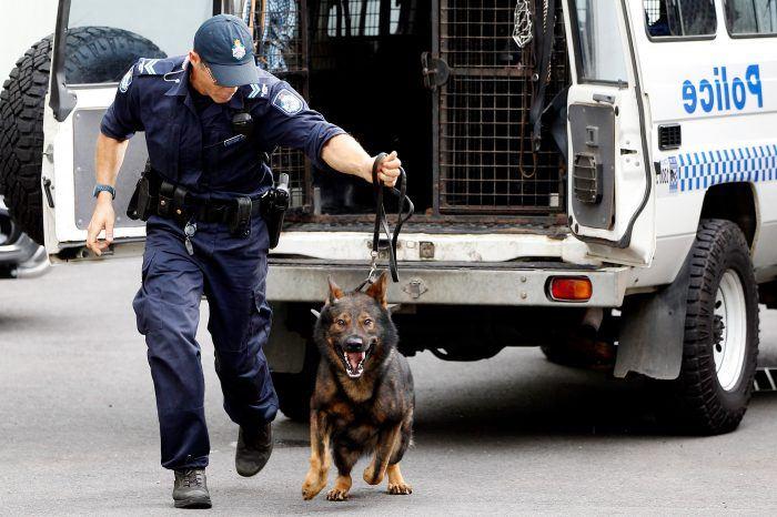 imagen de un perro policia en accion en un operativo urbano