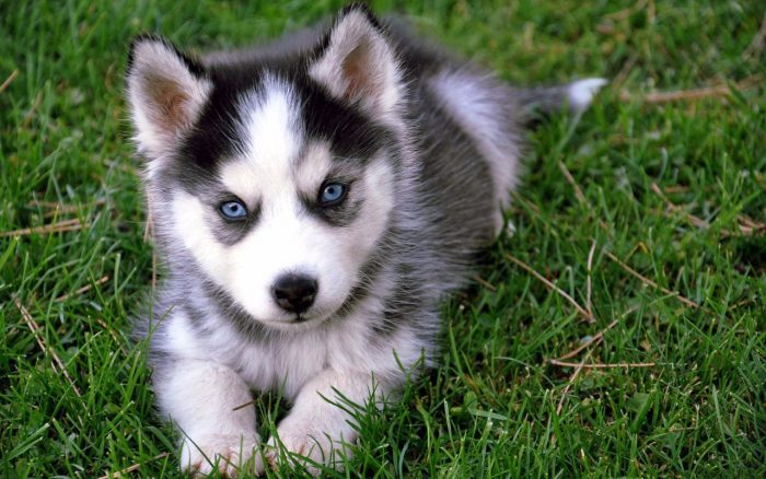 la raza de perro más bonita del mundo