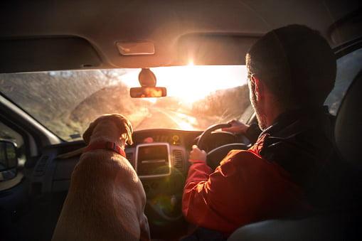 labrador retriever acompañando a joven dentro del auto