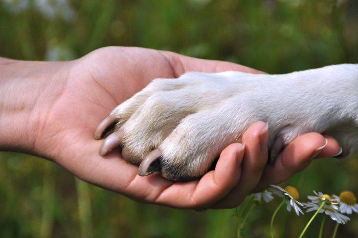 mano humana y pata de perro