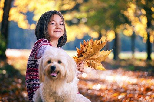 niña con su bichón maltés jugando en otoño