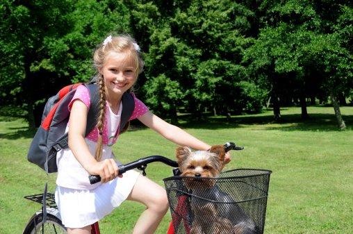 niña paseando en bicicleta con su yorkshire terrier