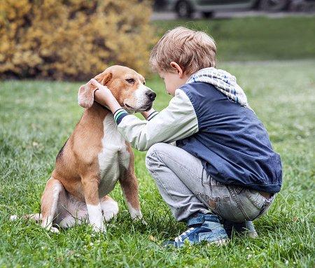 niño acariciando beagle