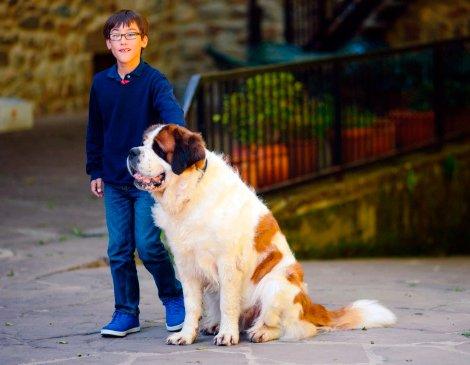 niño con perro san bernardo
