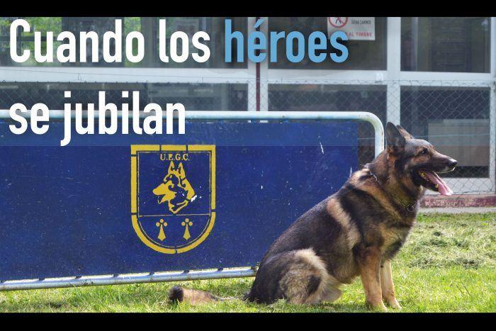 perro policía en adopción