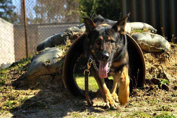 perro policía saliendo de un ducto de cañeria
