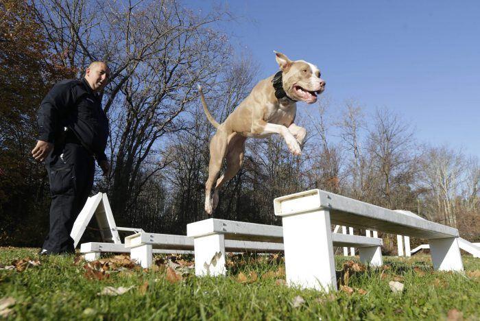 perro policía saltando sobre 4 bancas