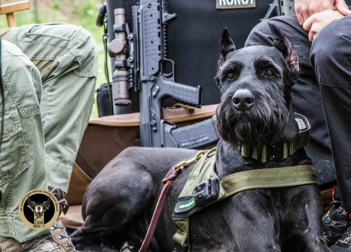 perro policía schnauzer