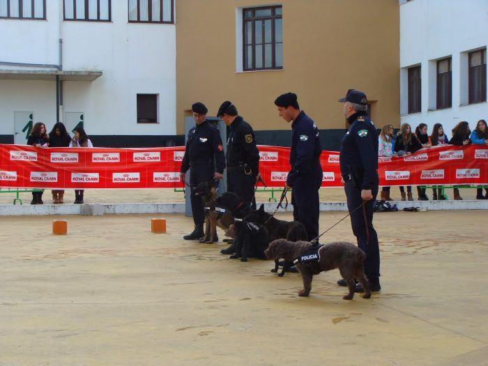 presentacion de perros policía auspiciada por royal canin