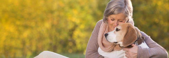 beagle junto a mujer mayor razas de perros pequeños para personas mayores