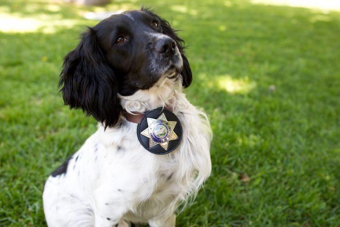 retrato de un perro policía