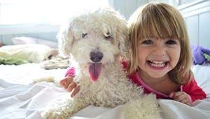 razas de perros pequeños blancos