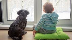 razas de perros pequeños para departamentos