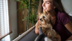 razas de perros pequeños para tener en casa