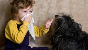 razas de perros pequeños que no dan alergia