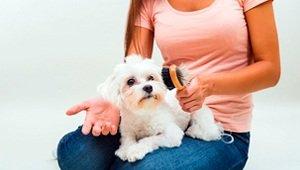 razas de perros pequeños que no sueltan pelo