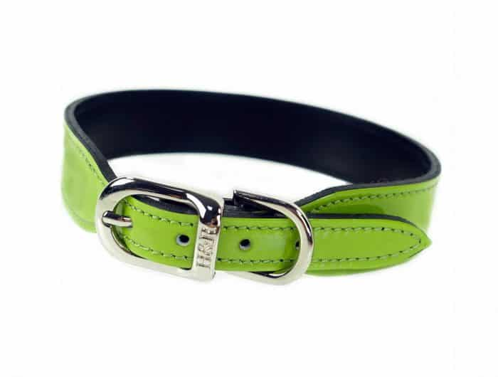 collar de hebilla para perros