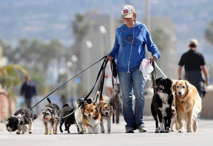 mujer paseando 9 perros